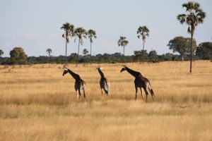 Zimbabwe, a gem to be discovered!