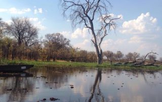 Tree next to the river in the Moremi and Khwai areas in Botswana