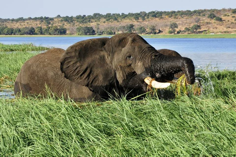 10 quick [but fascinating] facts about the Chobe River