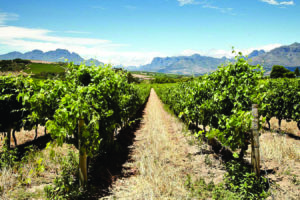 wedgeview-country-house-and-spa-stellenbosch-view-22