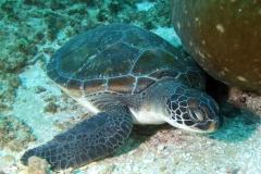 casa-ponta-scuba-diving-004