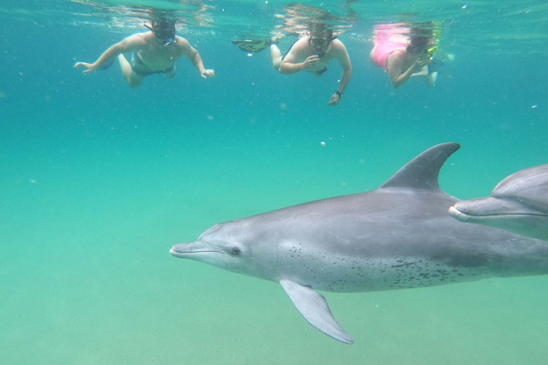 swimming-with-dolphin-003